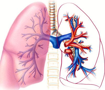 poumons-2